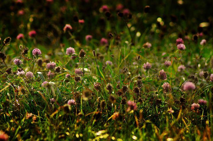 Kräuterwiese Herbst